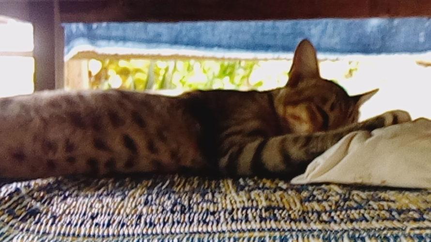タイ七日目前半! ワンダフルチェンコン ~ソーセージのようなバナナから癒しの猫まで~